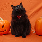 Zephyr with pumpkins (outtake)